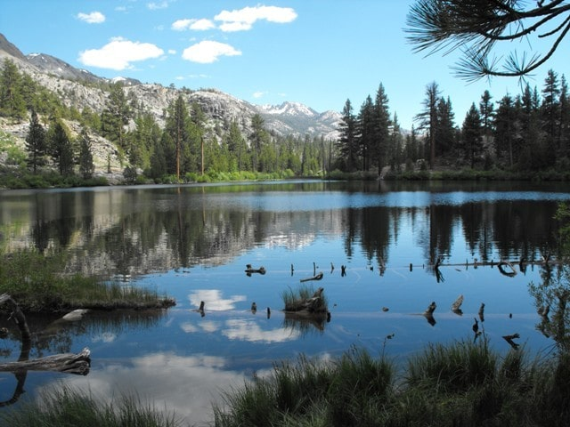 Leavitt Meadow - High Sierra - Naturalists at Large