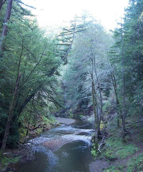 Samual Taylor Creek Naturalists At Large