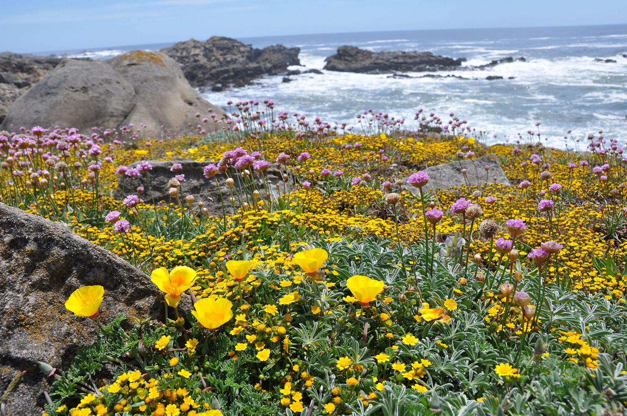 Naturalists at Large, Wildflowers