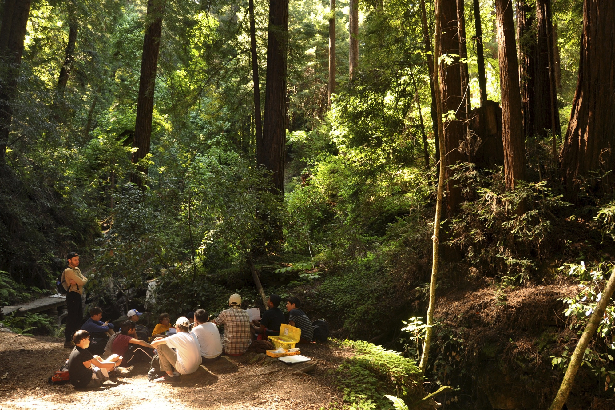 Naturalists at Large, Redwoods
